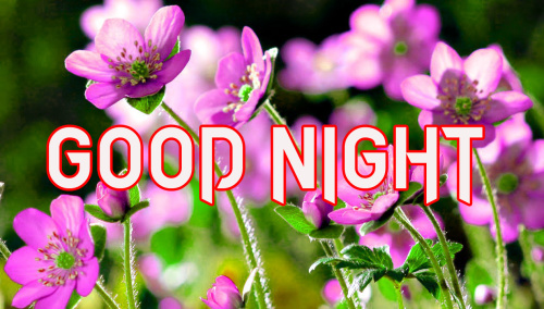 GOOD NIGHT IMAGES PICTURES PHOTO FREE HD