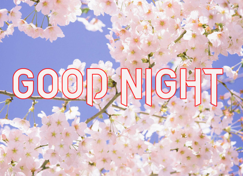 GOOD NIGHT IMAGES PICTURES PHOTO DOWNLOAD