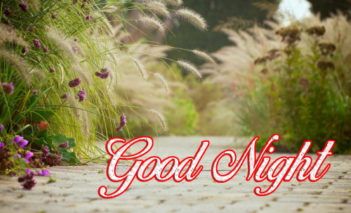 GOOD NIGHT WISHES IMAGES PICTURES PHOTO FREE HD DOWNLOAD