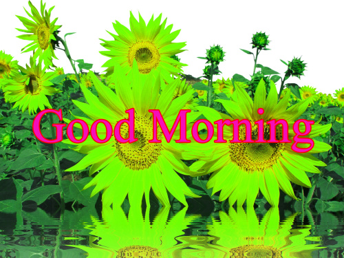 HD GOOD MORNING IMAGES PICTURES PHOTO HD DOWNLOAD