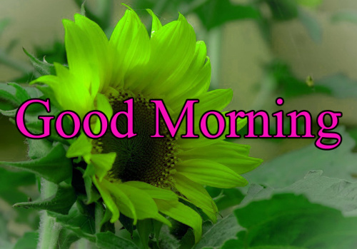 HD GOOD MORNING IMAGES PICTURES WALLPAPER FOR FACEBOOK