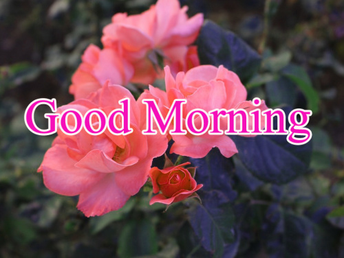 HD GOOD MORNING IMAGES WALLPAPER PHOTO DOWNLOAD