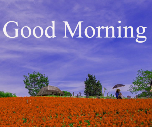 HD GOOD MORNING IMAGES WALLPAPER PHOTO HD