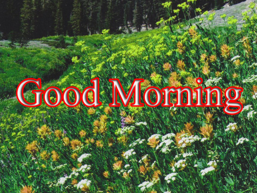 HD GOOD MORNING IMAGES PICTURES PHOTO DOWNLOAD