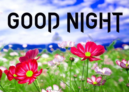 LATEST AMAZING GOOD NIGHT IMAGES WALLPAPER PHOTO DOWNLOAD