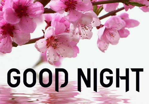 LATEST AMAZING GOOD NIGHT IMAGES PICS PHOTO FREE DOWNLOAD