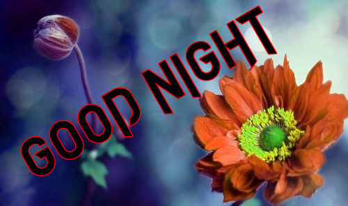 LATEST AMAZING GOOD NIGHT IMAGES PICTURES PHOTO DOWNLOAD