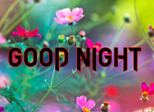 LATEST AMAZING GOOD NIGHT IMAGES PICS PHOTO DOWNLOAD