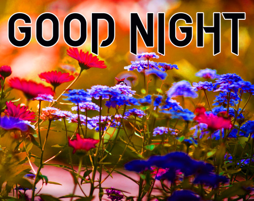 LATEST AMAZING GOOD NIGHT IMAGES WALLPAPER PICS FOR WHATSAPP