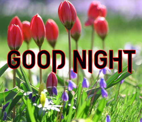 LATEST AMAZING GOOD NIGHT IMAGES PHOTO WALLPAPER DOWNLOAD