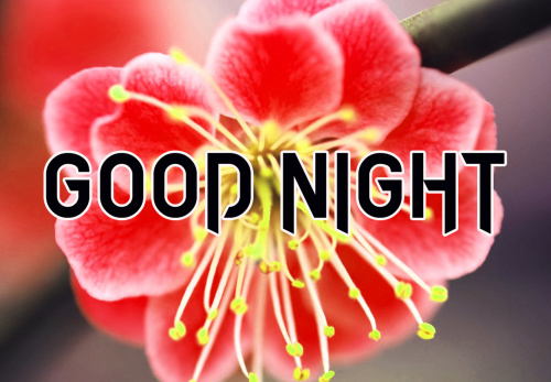 LATEST AMAZING GOOD NIGHT IMAGES PICS PHOTO HD