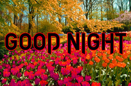 LATEST AMAZING GOOD NIGHT IMAGES PICTURES PHOTO FOR FACEBOOK