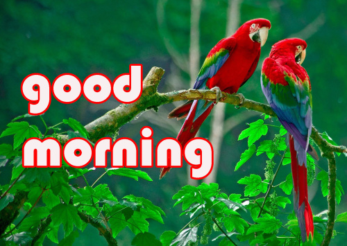 LATEST GOOD MORNING IMAGES  WALLPAPER PICS DOWNLOAD FOR WHATSAPP