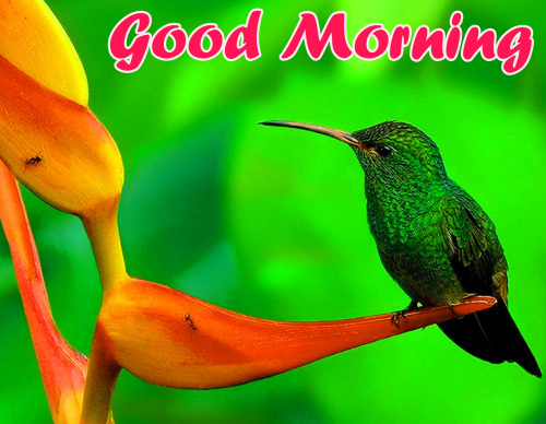 ALL NEW GOOD MORNING IMAGES PICS PHOTO FREE HD