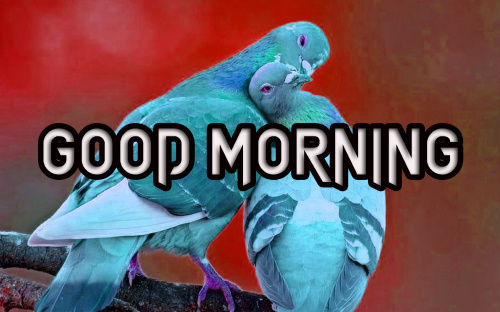 LATEST GOOD MORNING IMAGES PHOTO WALLPAPER HD