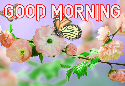 LATEST GOOD MORNING IMAGES WALLPAPER PICS FREE HD DOWNLOAD