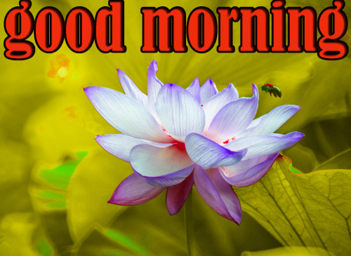 LATEST GOOD MORNING IMAGES WALLPAPER PICTURES PHOTO HD DOWNLOAD