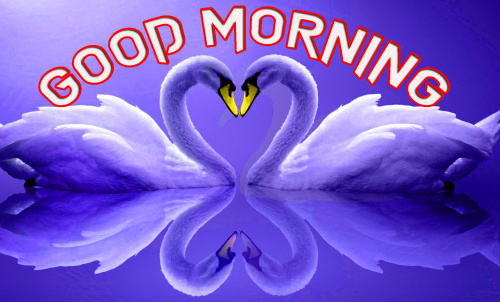 LATEST GOOD MORNING IMAGES PHOTO WALLPAPER DOWNLOAD