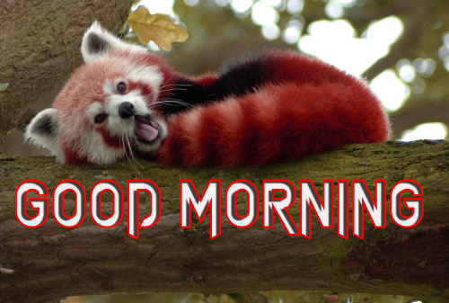LATEST GOOD MORNING IMAGES WALLPAPER PHOTO DOWNLOAD