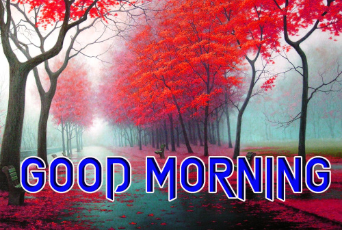 LATEST GOOD MORNING IMAGES PICS PHOTO DOWNLOAD HD