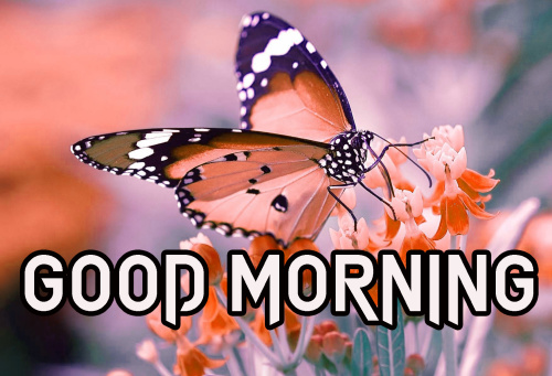 Latest Good Morning Images (36)