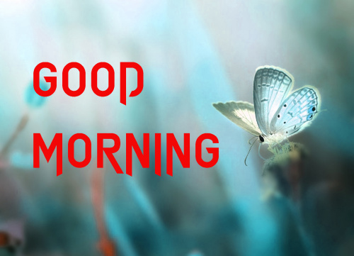 LATEST GOOD MORNING IMAGES PICS PHOTO FOR WHATSAPP