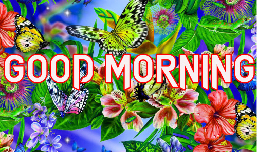 LATEST GOOD MORNING IMAGES WALLPAPER PHOTO FOR FACEBOOK