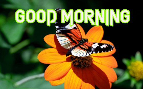 LATEST GOOD MORNING IMAGES PICTURES PHOTO HD DOWNLOAD
