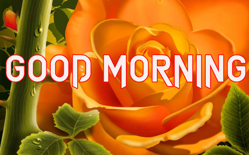 LATEST GOOD MORNING IMAGES PHOTO WALLPAPER FREE HD