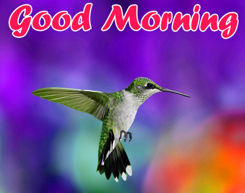 ALL NEW GOOD MORNING IMAGES PHOTO PICS DOWNLOAD