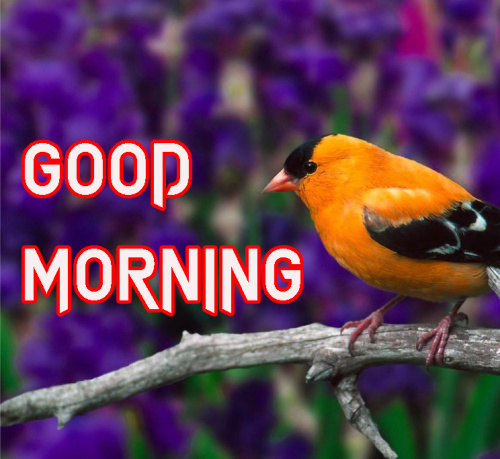 LATEST GOOD MORNING IMAGES PICTURES PHOTO DOWNLOAD