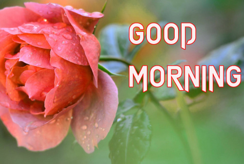 LATEST GOOD MORNING IMAGES WALLPAPER PHOTO HD