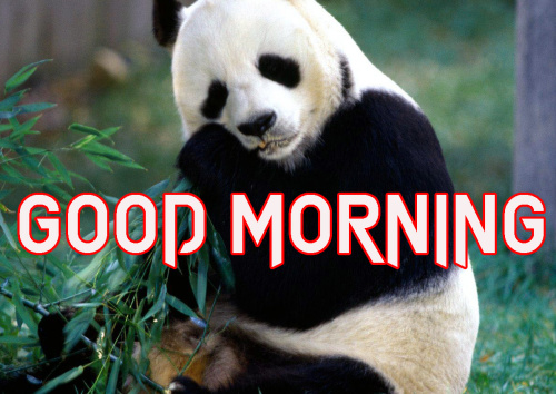 LATEST GOOD MORNING IMAGES WALLPAPER PICTURES PHOTO HD