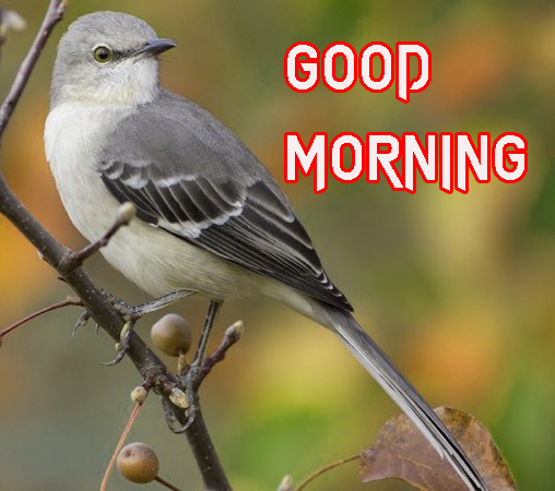 LATEST GOOD MORNING IMAGES PHOTO PICS DOWNLOAD