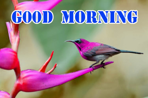 ALL NEW GOOD MORNING IMAGES PICTURES PHOTO DOWNLOAD