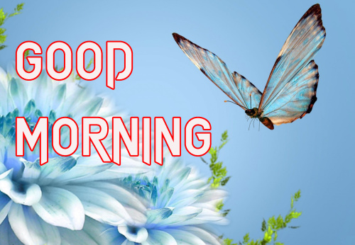 LATEST GOOD MORNING IMAGES PICS PHOTO FREE DOWNLOAD