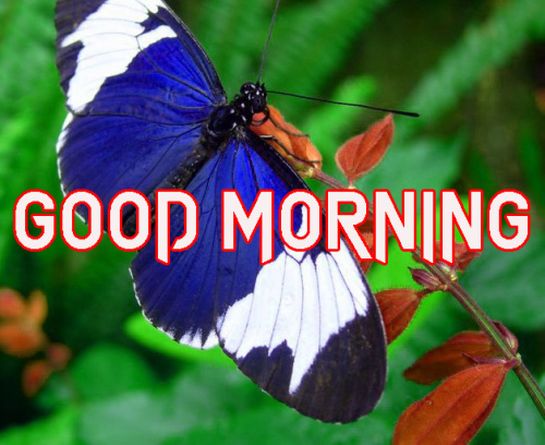 LATEST GOOD MORNING IMAGES WALLPAPER PICTURES FREE HD