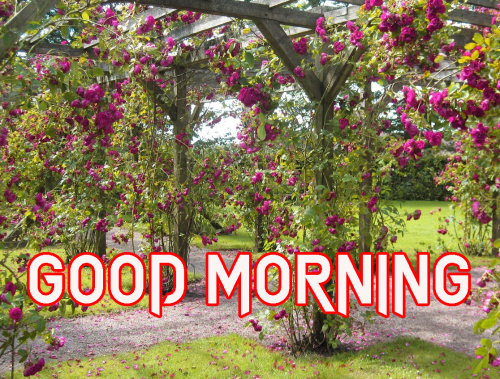 NATURE GOOD MORNING IMAGES PICTURES HD