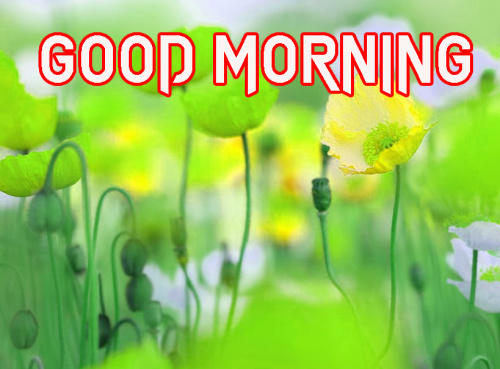 NATURE GOOD MORNING IMAGES PICTURES PHOTO HD
