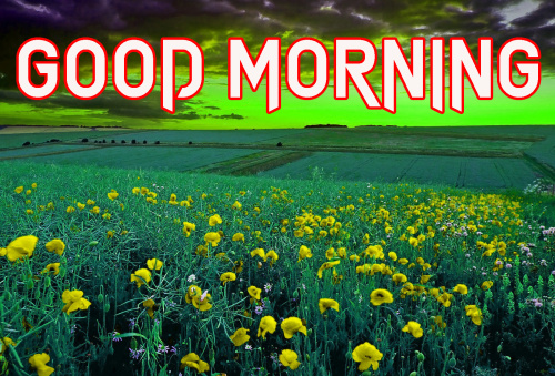NATURE GOOD MORNING IMAGES WALLPAPER PHOTO FREE DOWNLOAD