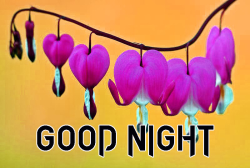 New Good Night / Gd Night flower Nature Art Images Pics Download