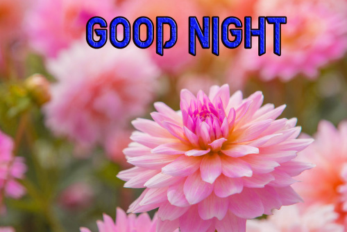 NEW GOOD NIGHT / GD NIGHT FLOWER NATURE ART IMAGES PICS WITH FLOWER