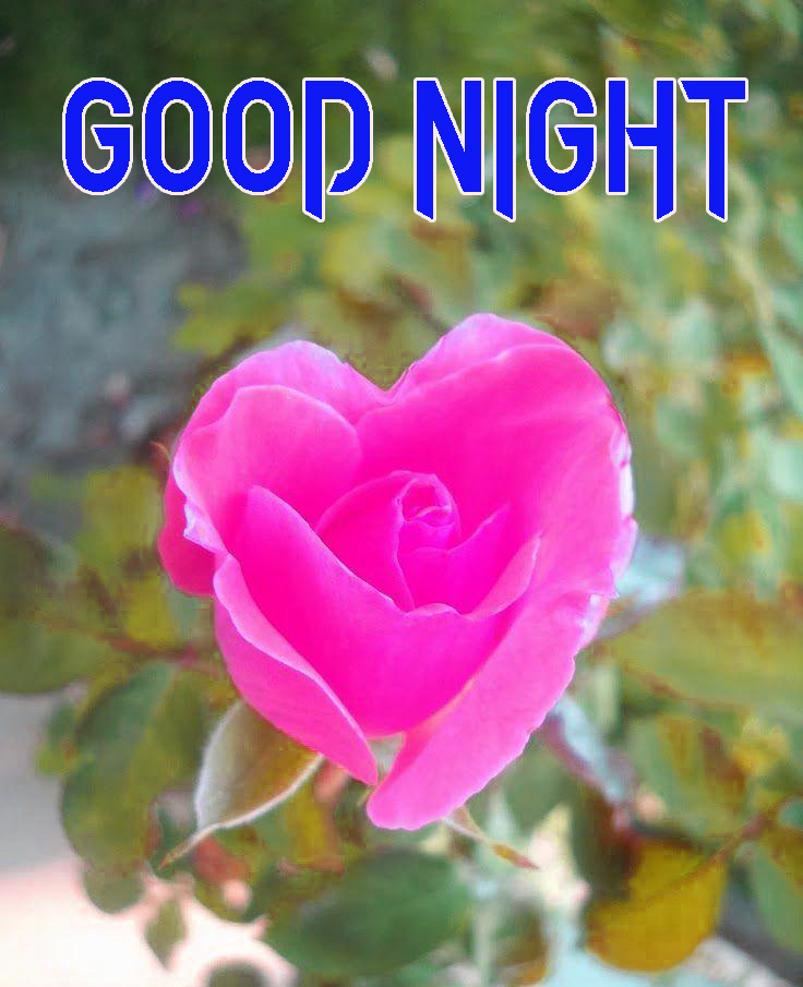 NEW GOOD NIGHT / GD NIGHT FLOWER NATURE ART IMAGES WALLPAPER DOWNLOAD