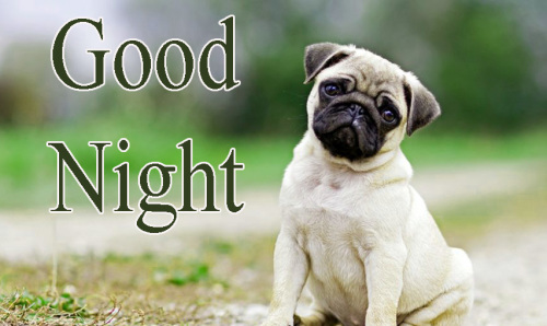 NEW GOOD NIGHT / GD NIGHT FLOWER NATURE ART IMAGES PICS WITH PUPPY LOVER