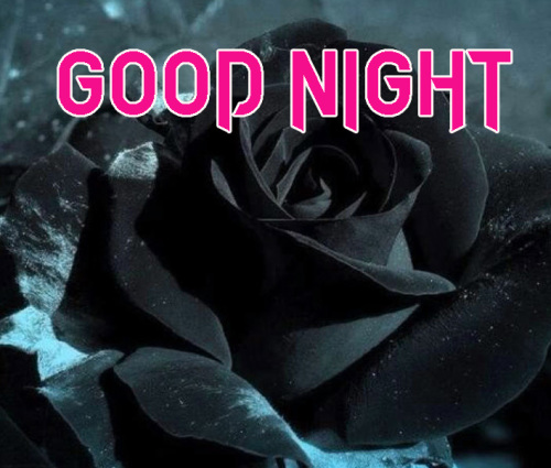 NEW GOOD NIGHT / GD NIGHT FLOWER NATURE ART IMAGES PHOTO DOWNLOAD