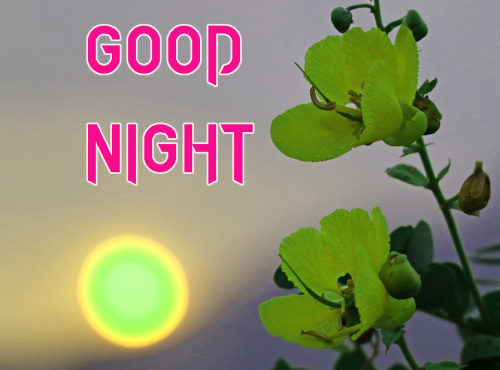 NEW GOOD NIGHT / GD NIGHT FLOWER NATURE ART IMAGES WALLPAPER PICS