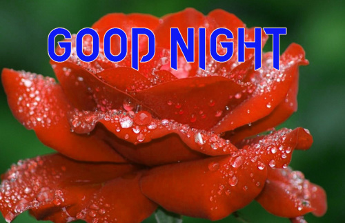 NEW GOOD NIGHT / GD NIGHT FLOWER NATURE ART IMAGES PICS WITH RED ROSE