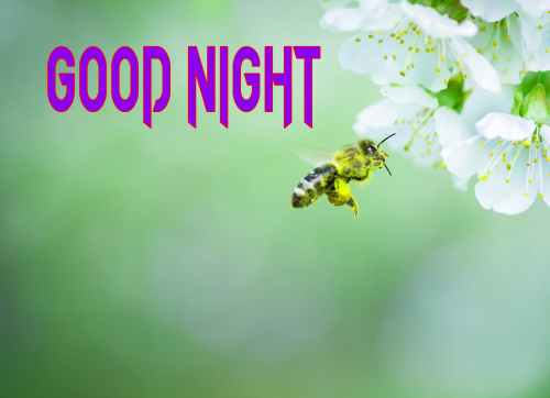 NEW GOOD NIGHT / GD NIGHT FLOWER NATURE ART IMAGES WALLPAPER FREE DOWNLOAD