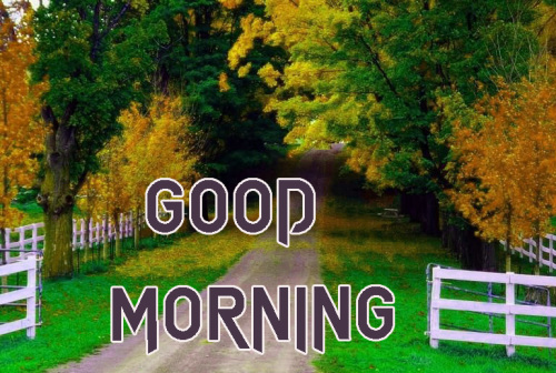 NEW GOOD MORNING IMAGES PHOTO WALLPAPER FREE HD