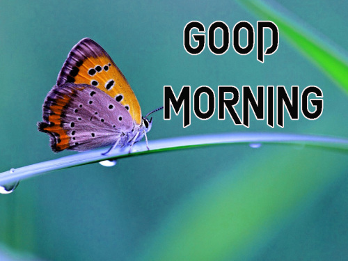NEW GOOD MORNING IMAGES PICTURES PHOTO HD DOWNLOAD